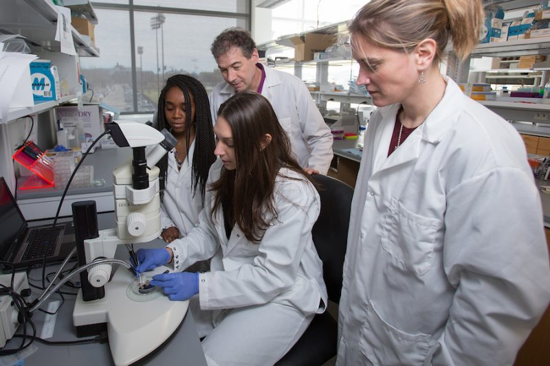 Cornell BMCB lab